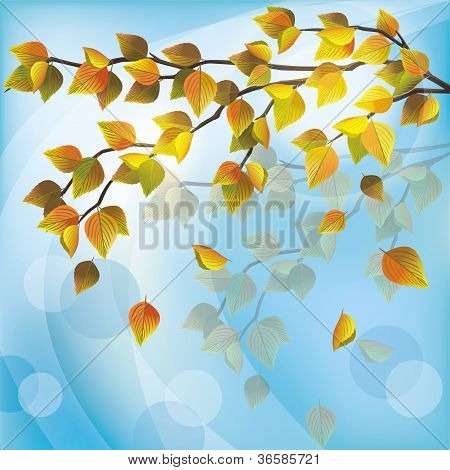 Autumn Tree, Light Nature Background