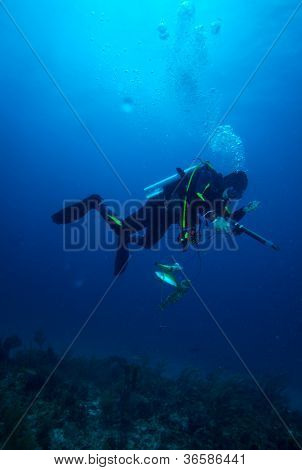 Spear Fisherman With Speargun