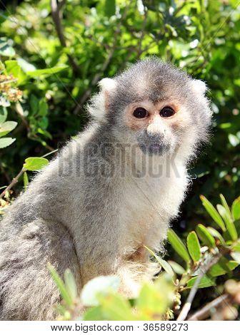 Squirrel Monkey Sitting On Tree Branch