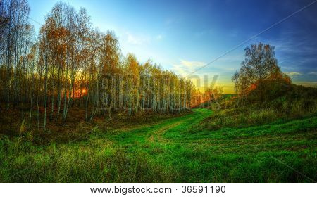 The Hdr Panorama Of The Golden Late Autumn Forest