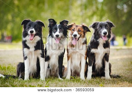 group of happy dogs sittingon the grass