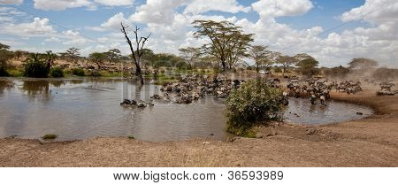 Savanna Watering Hole