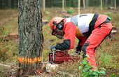 RAUBICHI, BELARUS - AUGUST 25: Richard Elliott from United Kingdom performs tree felling during Worl