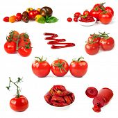foto of plum tomato  - Collection of tomato images - JPG