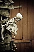 stock photo of sternum  - Profile of scary Halloween skeleton near red barn - JPG