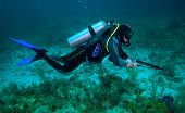 picture of spearfishing  - Spear Fisherman With Speargun near coral bottom - JPG