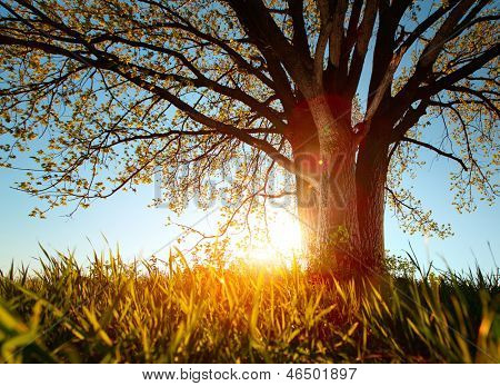 Spring tree in a meadow with grass at sunset