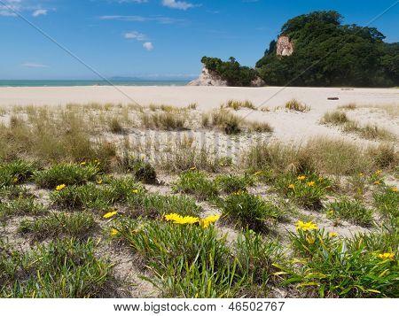 Scenic Coromandel Peninsula Nz Coastline Seascape