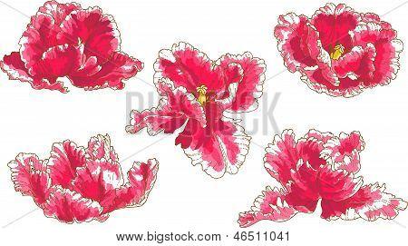 Set of 5 tulip flowers
