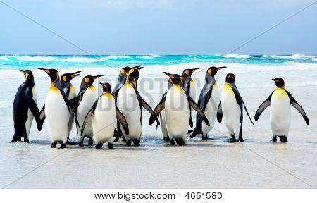 Kings Of The Beach