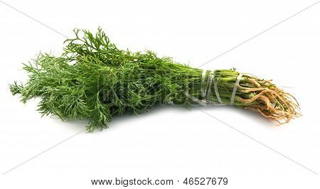 Sheaf Of Green Dil