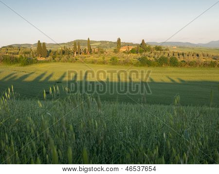 Green Field In Tuscan Landscape At Sunset