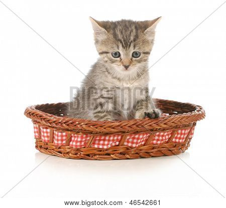 cute kitten sitting in a basket isolated on white background