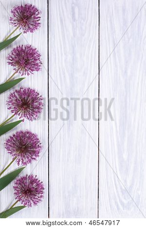 Holiday Decorating frame purple flowers alium