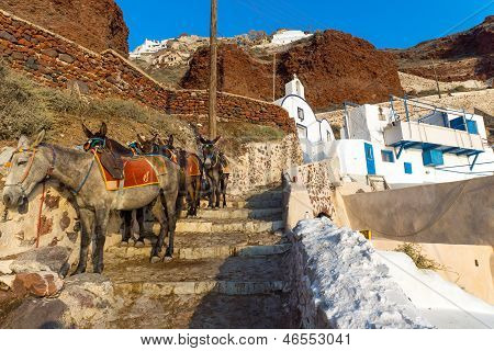 Mules waiting on Santorin