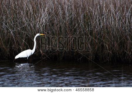 Bird in swamp land