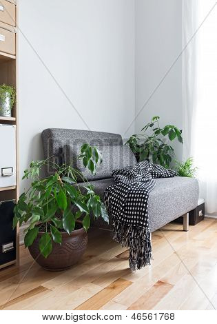 Living Room With Comfortable Armchair And Plants