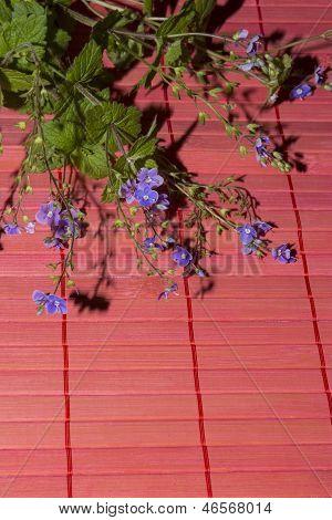 Veronica Chamaedrys Flowers