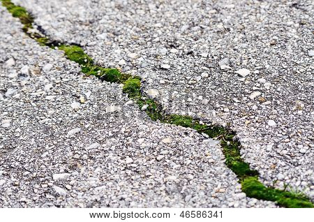 Asphalt Grass