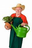 Senior Gardener With Flower Pot