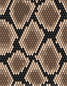 image of venomous animals  - Seamless pattern of snake skin for background design - JPG