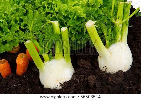 Vegetables on soil humus bed isolated on white background