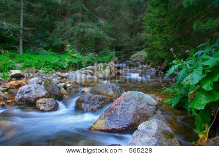 Stream Rushing Through The Forest