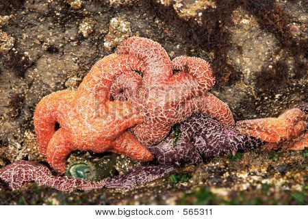 Group Of Starfish