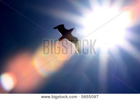 Seagull and Sun
