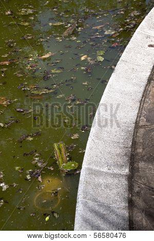 Disregarded Green Swimming Pool Surface
