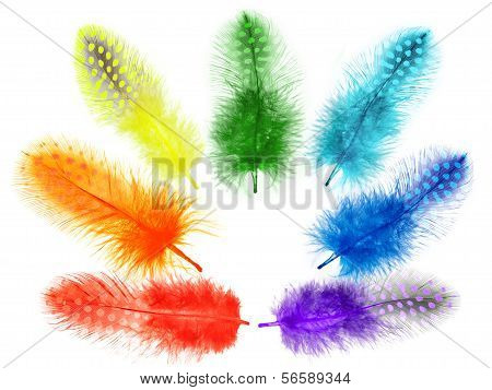 Guinea Fowl Feathers Are Painted In Bright Colors Of The Rainbow On A White Background