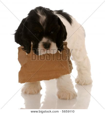 Cocker Puppy With Blank Sign