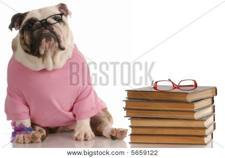 English Bulldog With Stack Of Books