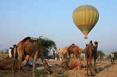 Hot air balloon flying over tribal nomad camel camp early in the morning during cattle fair,India
