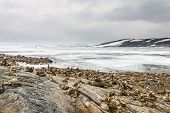 picture of arctic landscape  - Vastness of the Arctic landscape at uninhabited areas in Norway - JPG