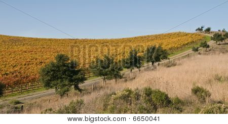 Perimeter Road of Vinyard in Autumn