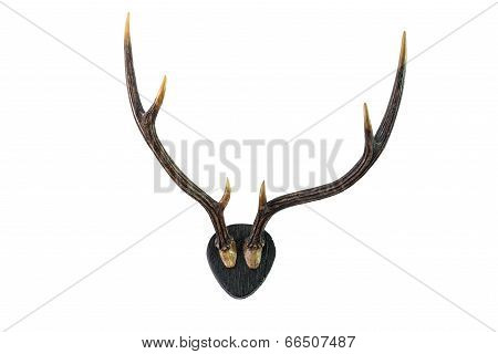 Deer Antlers. Isolated On White