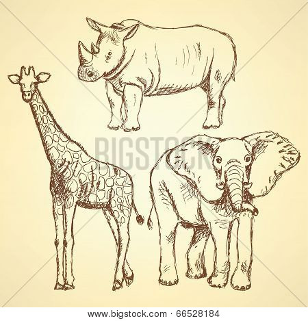 Sketch Giraffe, Elephant, Rhino, Vector Background