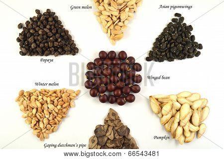 Seeds, Thailand