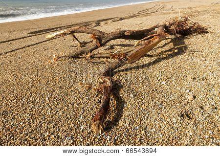Driftwood On Stony Beach