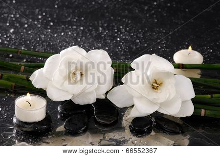 spa concept �¢�?�?gardenia flower with candle and bamboo grove on wet