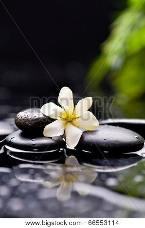 Spa still with gardenia flower on pebbles reflection