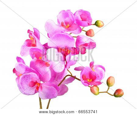 Flowers Of Pink Orchid