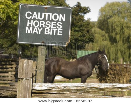 Caution Horses May Bite