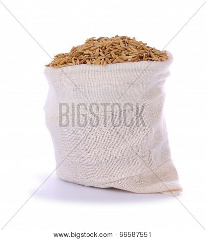 Paddy dry rice in sack on white background.