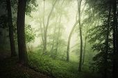 foto of rain  - Enchanted green forest with fog after rain - JPG