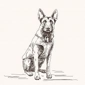 stock photo of belgian shepherd dogs  - Sketch of Belgian Shepherd dog - JPG