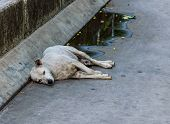 pic of stray dog  - Dirty stray dog lies alone on wet concrete - JPG