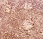 foto of paleontologist  - Dinosaur footprint in limestone 180 million years old Navajo National Monument Arizona - JPG