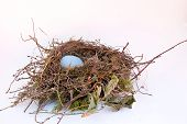 foto of nest-egg  - A solitary egg in a bird - JPG